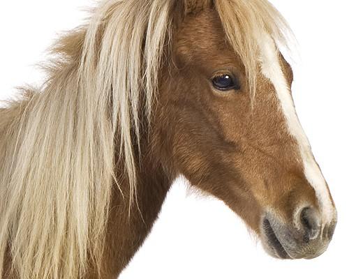 Produktfoto Wandtattoo No.136 Pony