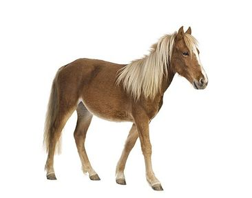 Product picture Wall Decal no.136 Pony