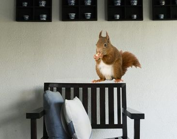 Produktfoto Wall Decal no.137 Squirrel