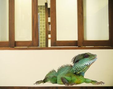 Product picture Wall Decal no.139 Green Iguana I