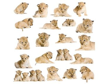 Product picture Wall Decal no.158 Lionbaby Set