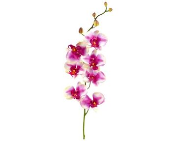 Product picture Wall Decal no.176 Orchid Rose I