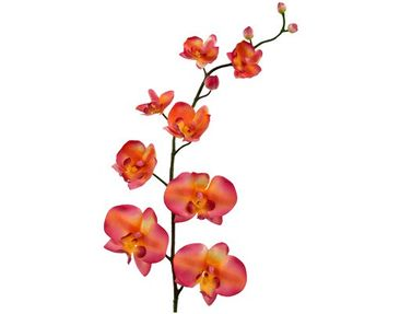 Product picture Wall Decal no.185 Orchid Orange