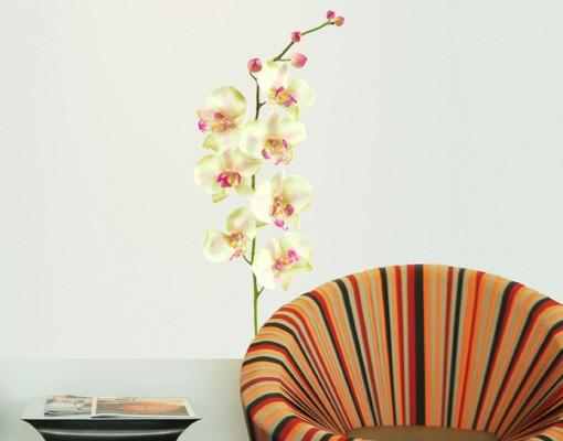 Produktfoto Wandtattoo Orchidee No.190 Orchidee Weiß II