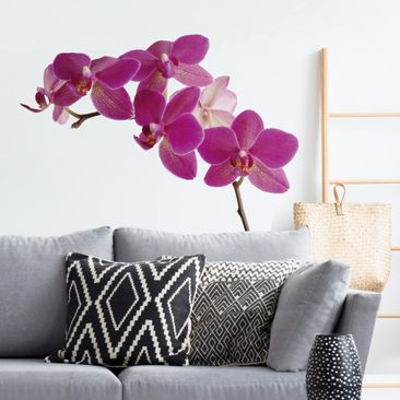 Produktfoto Wall Decal no.SB58 Orchid II