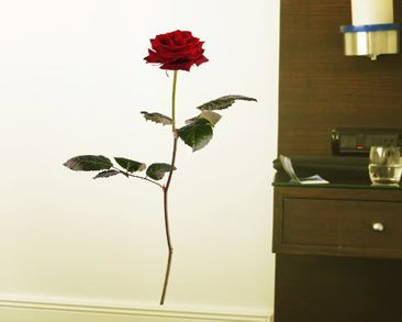 Produktfoto Wall Decal no.sb53 Red Rose I