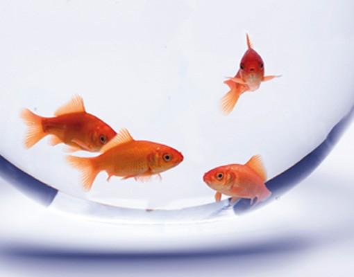 Produktfoto Selbstklebendes Wandbild The Flying Goldfish Triptychon