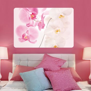 Product picture Wall Mural Delicate Orchids