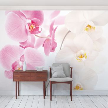 Product picture Photo Wall Mural Delicate Orchids