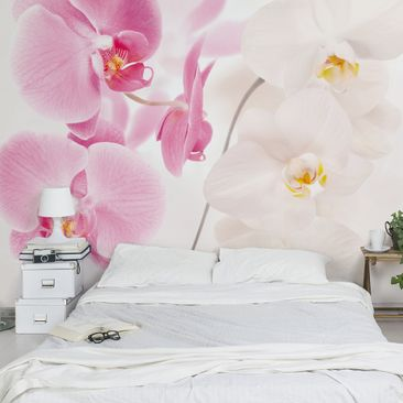 Produktfoto Photo Wall Mural Delicate Orchids