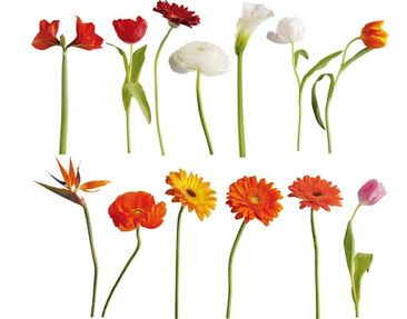 Product picture Wall Decal No.SB48 Colourful Flowermix I