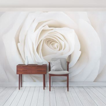 Produktfoto Photo Wall Mural Pretty White Rose