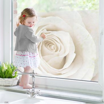 Product picture Window Mural Pretty White Rose