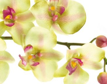 Product picture Wall Mural Dreamy Orchid Waters
