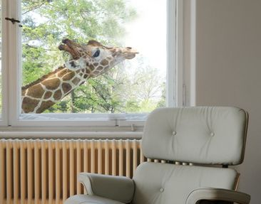 Product picture Window Sticker no.302 searching giraffe