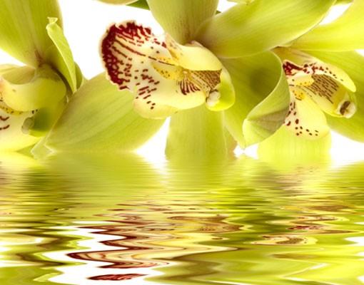 Produktfoto Selbstklebendes Wandbild Splendid Orchid Waters Triptychon I