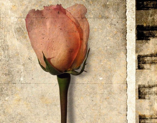 Produktfoto Selbstklebendes Wandbild Inner Rose