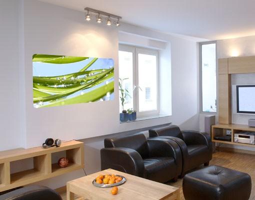 Produktfoto Selbstklebendes Wandbild Fresh Green