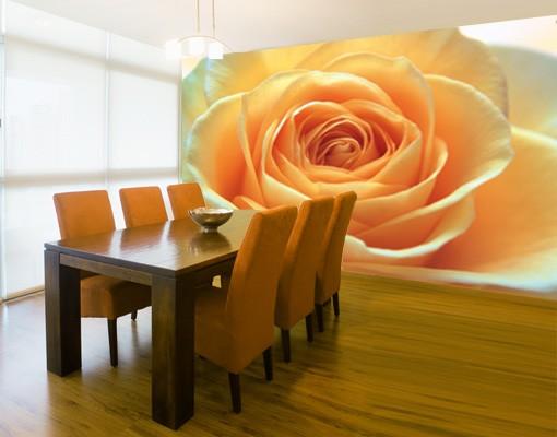 "Produktfoto Papiertapete - Fototapete No.39 ""THE ORANGE ROSE"" 400x280cm"