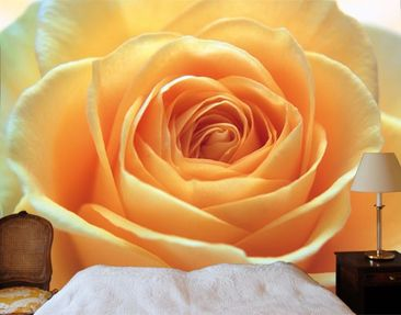 """Product picture Photo wall mural no.39 """"THE ORANGE ROSE""""..."""