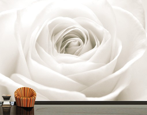 "Produktfoto Papiertapete - Fototapete No.40 ""THE WHITE ROSE"" 400x280cm"