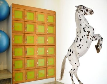 Produktfoto Wall Decal no.310 Appaloosa