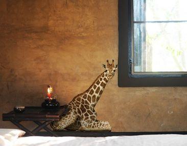 Produktfoto Wandtattoo Giraffe No.313 Liegende Giraffe