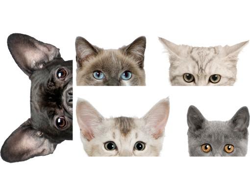 Produktfoto Wandtattoo Hund Katze No.273 Katzen mit Hundeblick