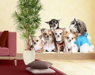Produktfoto Wall Decal No.277 Chihuahuas and a Shi