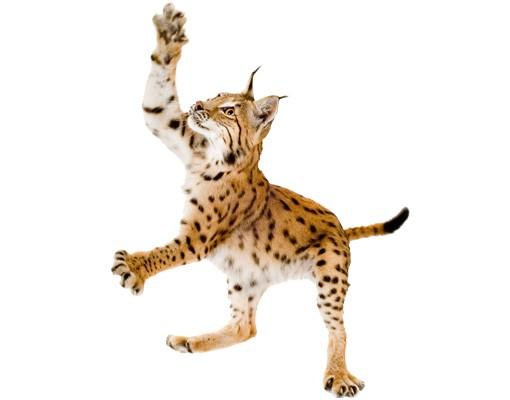 Produktfoto Wandtattoo Katze No.371 Lurking Lynx