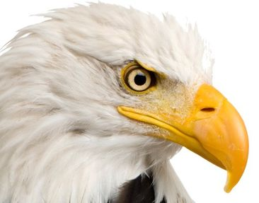 Product picture Window Sticker No.379 Eye of the Eagle