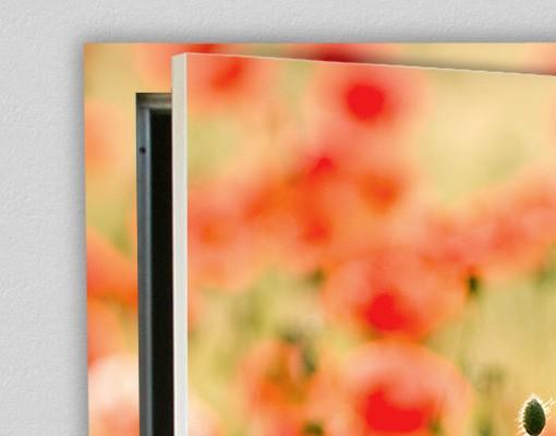 Produktfoto TürTapete Summer Poppies