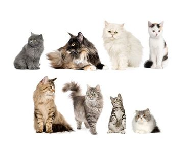 Product picture Wall Decal no.417 Cat's Gang