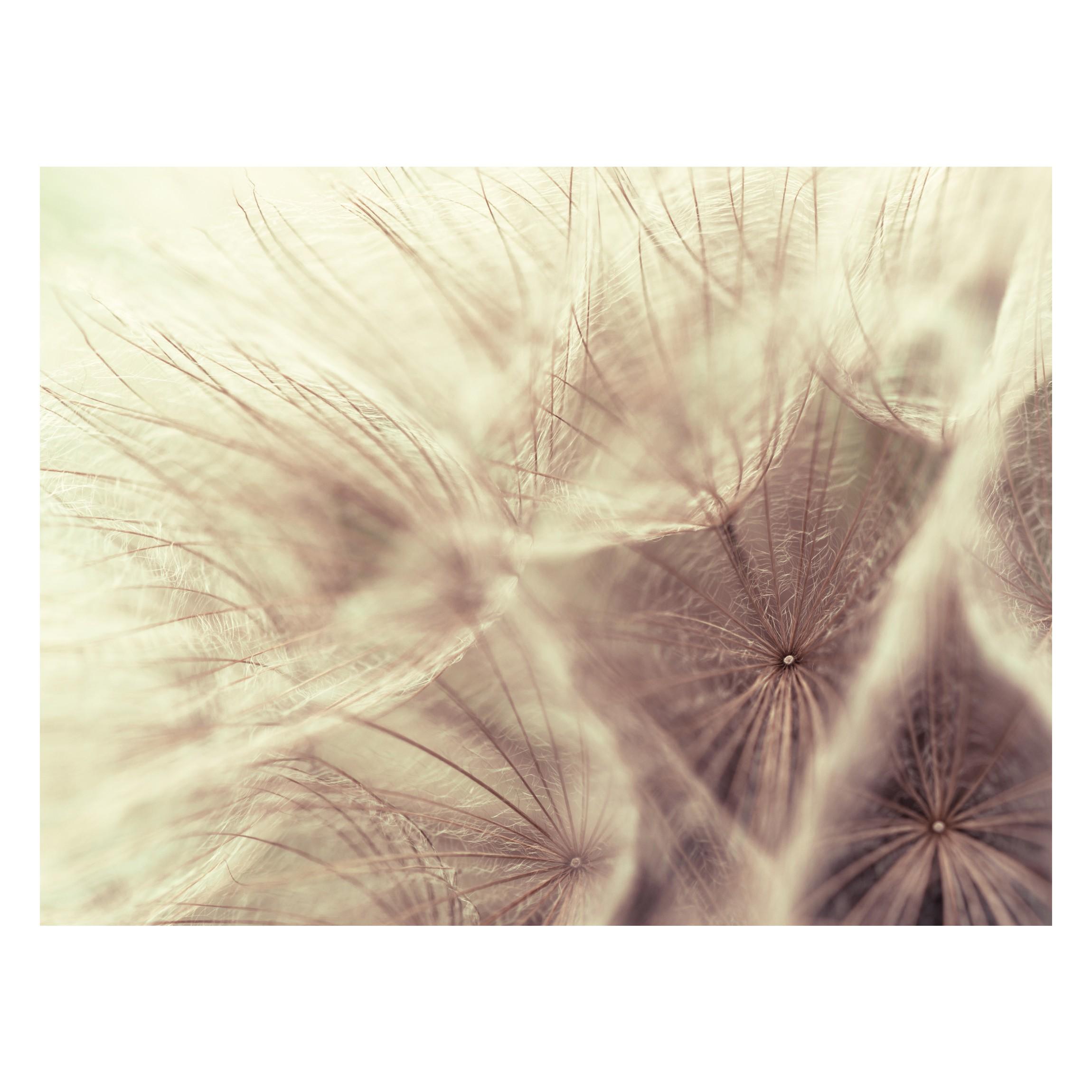 selbstklebende tapete detailreiche pusteblumen makroaufnahme mit vintage blur effekt. Black Bedroom Furniture Sets. Home Design Ideas