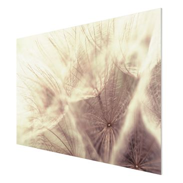 Immagine del prodotto Stampa su Forex - Detailed dandelions macro shot with vintage blur effect - Orizzontale 2:3