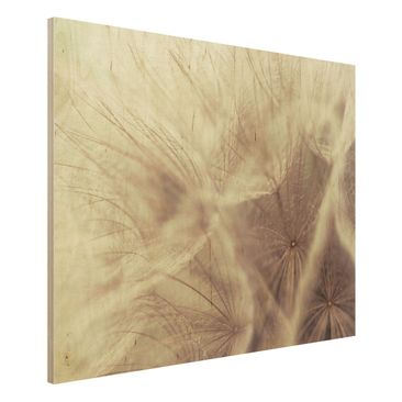 Product picture Wood Print - Detailed dandelions macro...