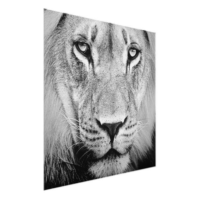 Produktfoto Glasbild - Alter Löwe - Quadrat 1:1