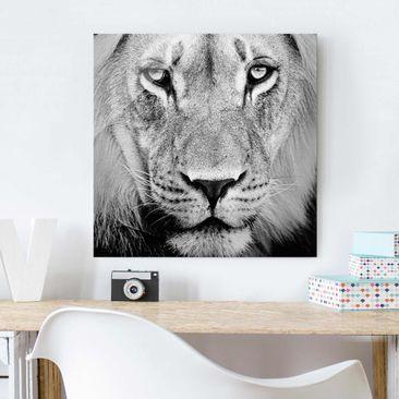 Immagine del prodotto Stampa su vetro - Old lion - Quadrato 1:1