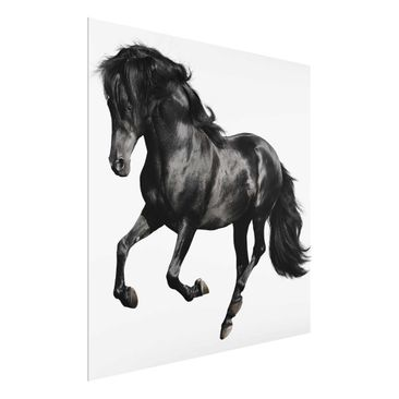Product picture Print on Glass - Arabian stallion -...