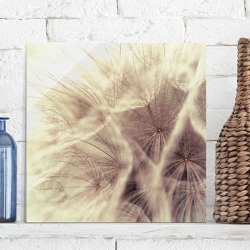 Product picture Print on Glass - Detailed Dandelions...