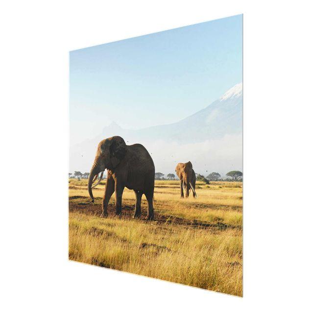 Produktfoto Glasbild Afrika - Elefanten vor dem Kilimanjaro in Kenya - Quadrat 1:1