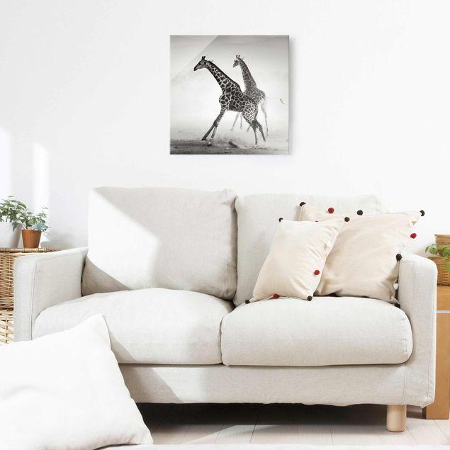 Produktfoto Glasbild - Giraffenjagd - Quadrat 1:1