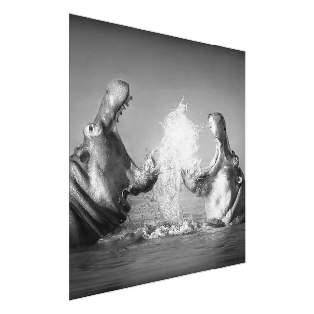 Produktfoto Glasbild - Hippo Fight - Quadrat 1:1