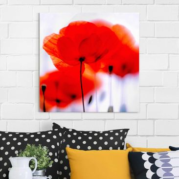 Produktfoto Glasbild Mohnblume - Magic Poppies - Blumenbild Glas Quadrat 1:1