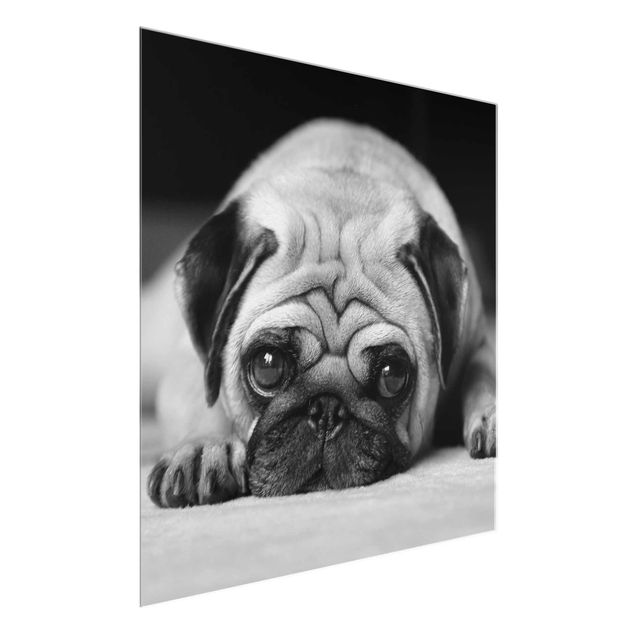 Produktfoto Glasbild - Pug Loves You II - Quadrat 1:1