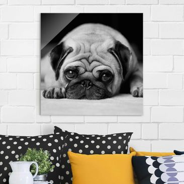 Produktfoto Glasbild - Pug Loves You II - Quadrat...