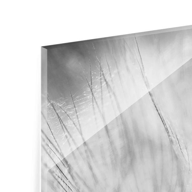 Produktfoto Glasbild - Pusteblumen Makroaufnahme in schwarz weiss - Quadrat 1:1 - Blumenbild Glas
