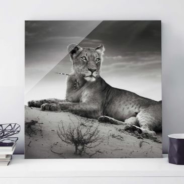 Product picture Print on Glass - Resting Lion - Glass...