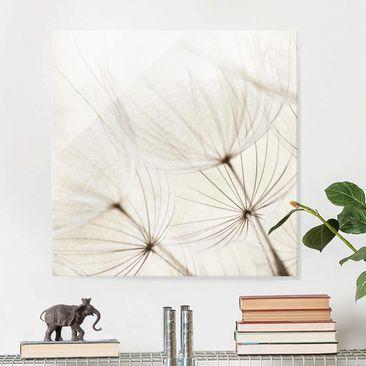 Produktfoto Glasbild - Sanfte Gräser - Quadrat 1:1 - Blumenbild Glas