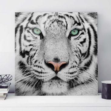 Produktfoto Glasbild - Weißer Tiger - Quadrat 1:1